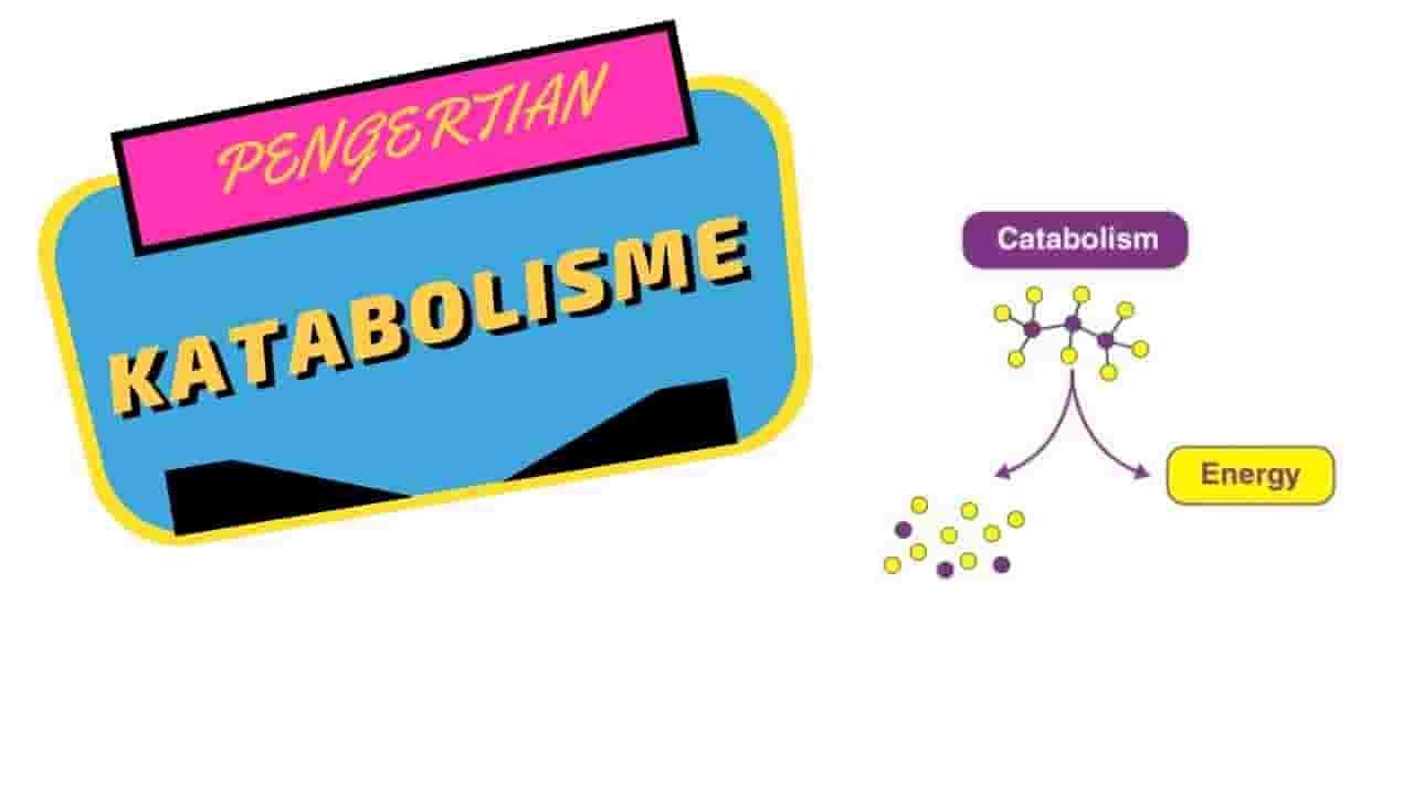 Katabolisme adalah